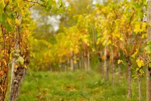 Natural wines are increasingly popular among a wide variety of customers.